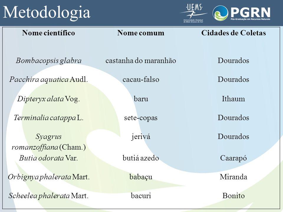 Metodologia Nome científicoNome comumCidades de Coletas Bombacopsis glabracastanha do maranhãoDourados Pacchira aquatica Audl.cacau-falsoDourados Dipt