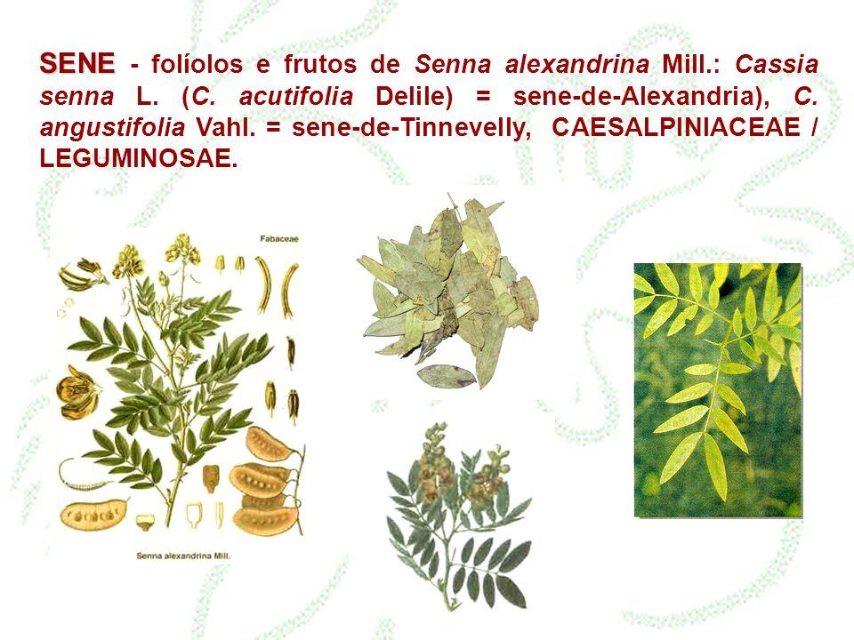 SENE SENE - folíolos e frutos de Senna alexandrina Mill.: Cassia senna L. (C. acutifolia Delile) = sene-de-Alexandria), C. angustifolia Vahl. = sene-d