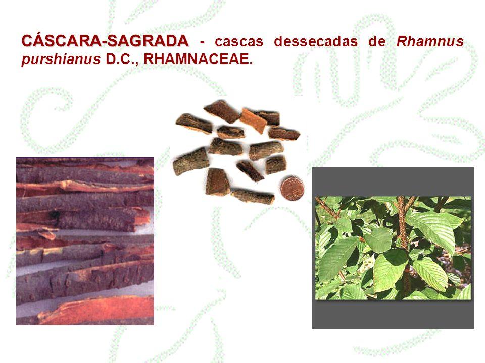 CÁSCARA-SAGRADA CÁSCARA-SAGRADA - cascas dessecadas de Rhamnus purshianus D.C., RHAMNACEAE.