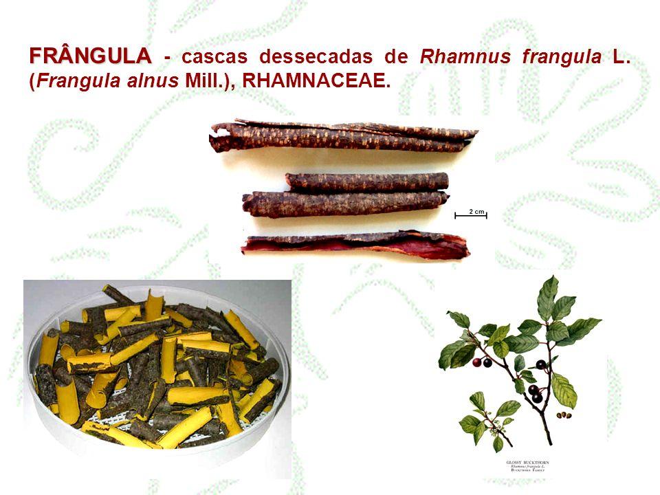 FRÂNGULA FRÂNGULA - cascas dessecadas de Rhamnus frangula L. (Frangula alnus Mill.), RHAMNACEAE.