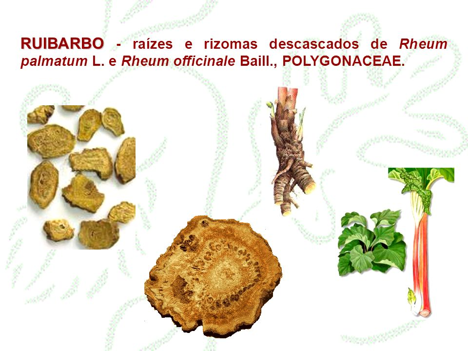 RUIBARBO RUIBARBO - raízes e rizomas descascados de Rheum palmatum L. e Rheum officinale Baill., POLYGONACEAE.