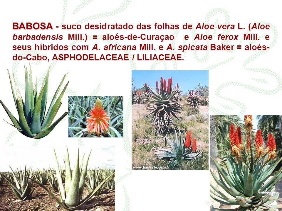 BABOSA BABOSA - suco desidratado das folhas de Aloe vera L. (Aloe barbadensis Mill.) = aloés-de-Curaçao e Aloe ferox Mill. e seus híbridos com A. afri