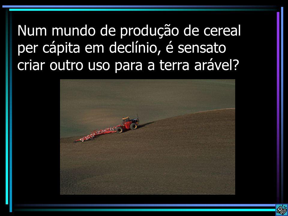 Num mundo de produção de cereal per cápita em declínio, é sensato criar outro uso para a terra arável?