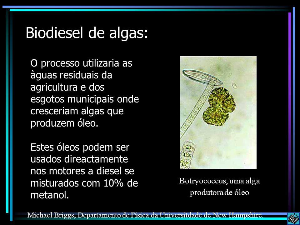 Biodiesel de algas: O processo utilizaria as àguas residuais da agricultura e dos esgotos municipais onde cresceriam algas que produzem óleo. Estes ól