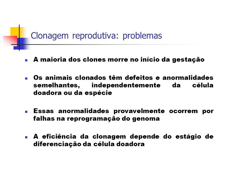 Clonagem reprodutiva: problemas A maioria dos clones morre no início da gestação Os animais clonados têm defeitos e anormalidades semelhantes, indepen