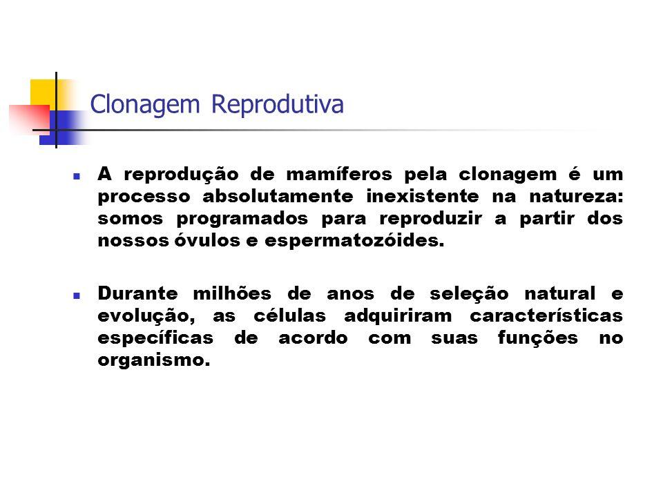 Clonagem Reprodutiva A reprodução de mamíferos pela clonagem é um processo absolutamente inexistente na natureza: somos programados para reproduzir a