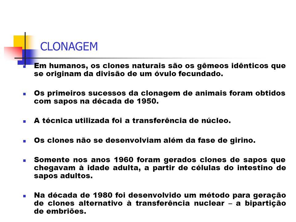 CLONAGEM Em humanos, os clones naturais são os gêmeos idênticos que se originam da divisão de um óvulo fecundado. Os primeiros sucessos da clonagem de