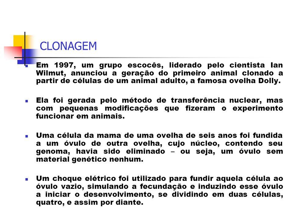 CLONAGEM Em 1997, um grupo escocês, liderado pelo cientista Ian Wilmut, anunciou a geração do primeiro animal clonado a partir de células de um animal