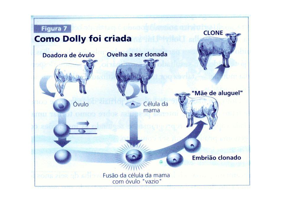 Clonagem Reprodutiva A clonagem não é eficiente, pois para gerar um clone bovino é preciso fazer em média cem transferências nucleares.