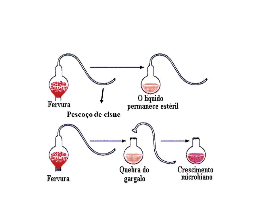 Pasteur Foi quem derrubou definitivamente a idéia da abiogênese, com a utilização de uma vidraria chamada pescoço de cisne.