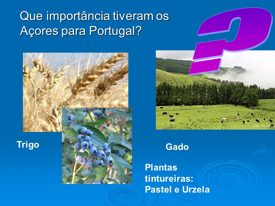 Que importância tiveram os Açores para Portugal? Que importância tiveram os Açores para Portugal? Trigo Gado Plantas tintureiras: Pastel e Urzela
