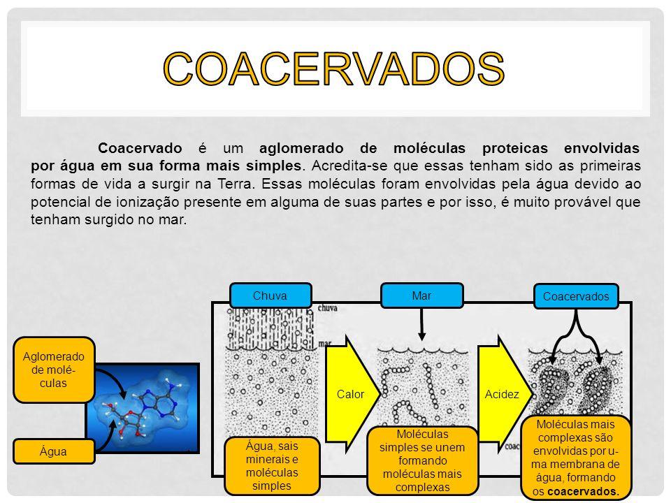 Coacervado é um aglomerado de moléculas proteicas envolvidas por água em sua forma mais simples. Acredita-se que essas tenham sido as primeiras formas