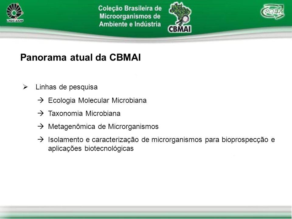 Panorama atual da CBMAI Linhas de pesquisa Ecologia Molecular Microbiana Taxonomia Microbiana Metagenômica de Microrganismos Isolamento e caracterizaç