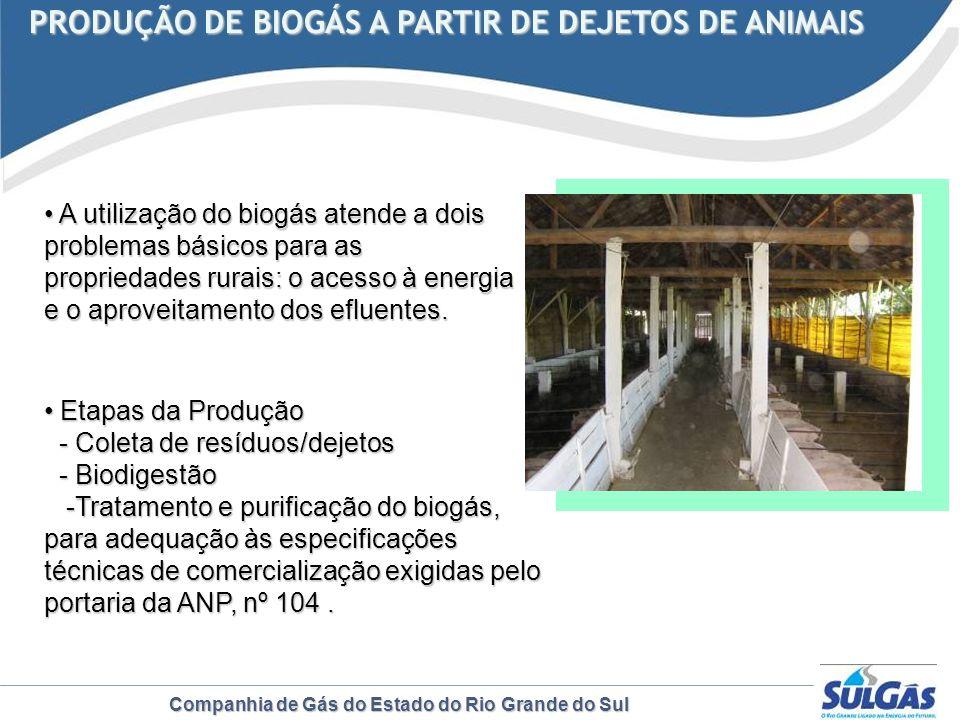 Companhia de Gás do Estado do Rio Grande do Sul PRODUÇÃO DE BIOGÁS A PARTIR DE DEJETOS DE ANIMAIS PRODUÇÃO DE BIOGÁS A PARTIR DE DEJETOS DE ANIMAIS A
