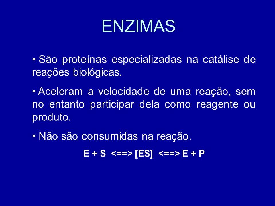 ENZIMAS São proteínas especializadas na catálise de reações biológicas. Aceleram a velocidade de uma reação, sem no entanto participar dela como reage