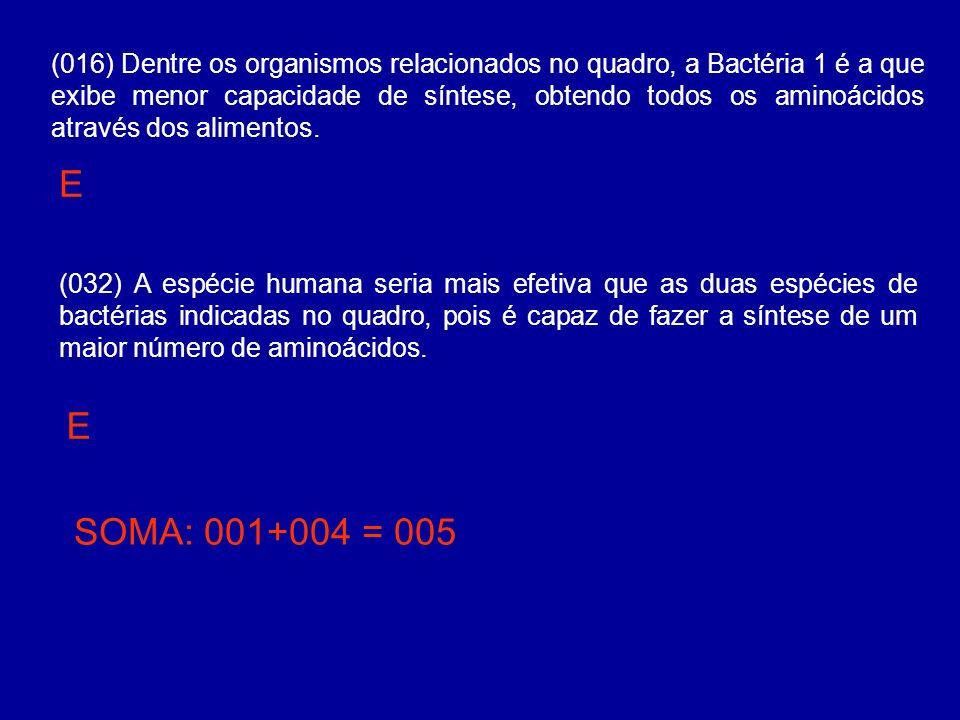 (032) A espécie humana seria mais efetiva que as duas espécies de bactérias indicadas no quadro, pois é capaz de fazer a síntese de um maior número de