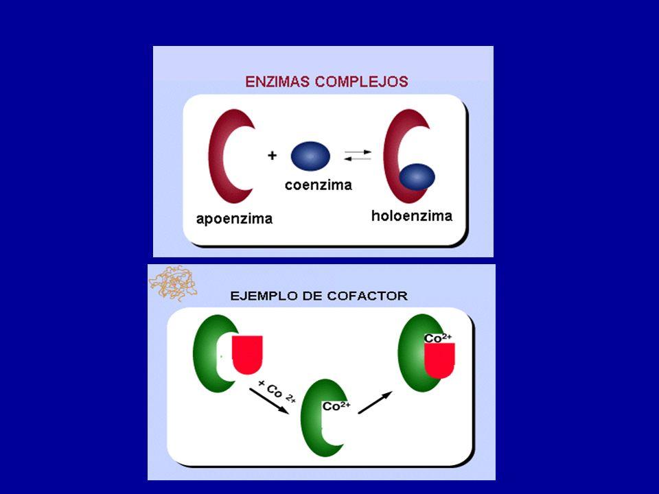 INIBIDORES DA ATIVIDADE ENZIMÁTICA Íon Cianeto (CN - ) : Combina-se com a enzima citocromo oxidase impedindo a respiração celular.