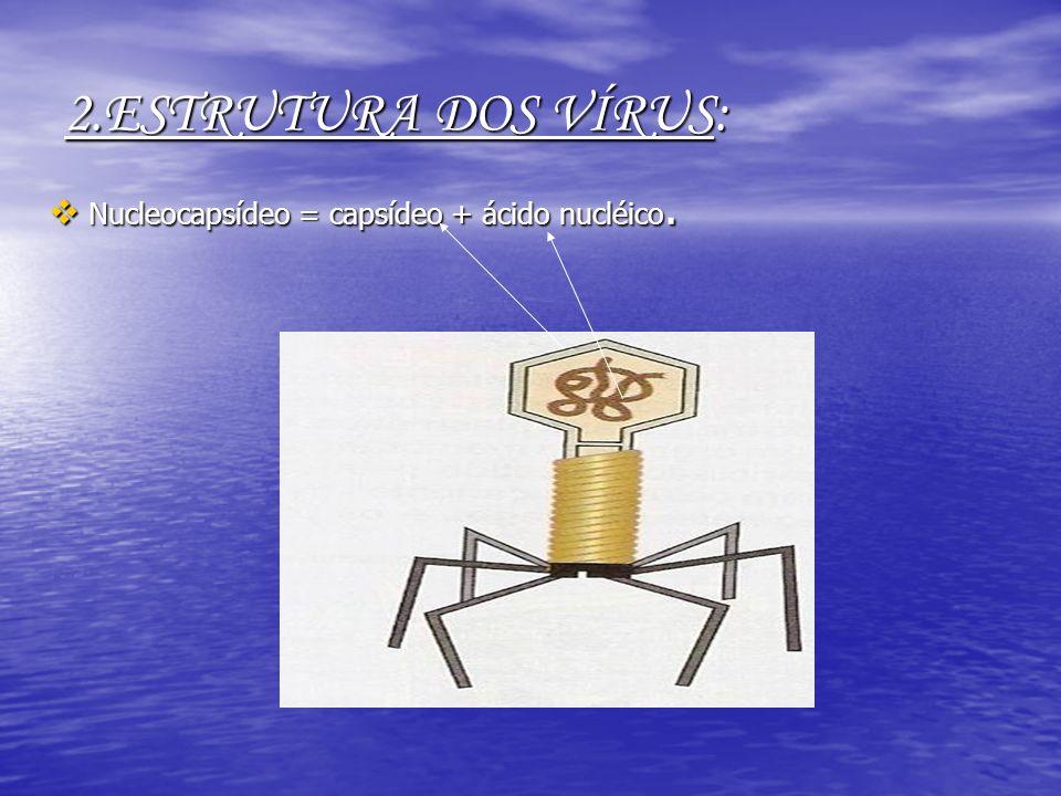 2.ESTRUTURA DOS VÍRUS: Nucleocapsídeo = capsídeo + ácido nucléico. Nucleocapsídeo = capsídeo + ácido nucléico.