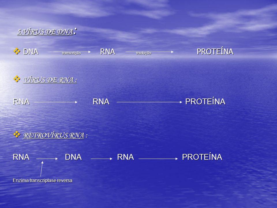 5.VÍRUS DE DNA : DNA transcrição RNA tradução PROTEÍNA DNA transcrição RNA tradução PROTEÍNA VÍRUS DE RNA : VÍRUS DE RNA : RNA RNA PROTEÍNA RETROVÍRUS