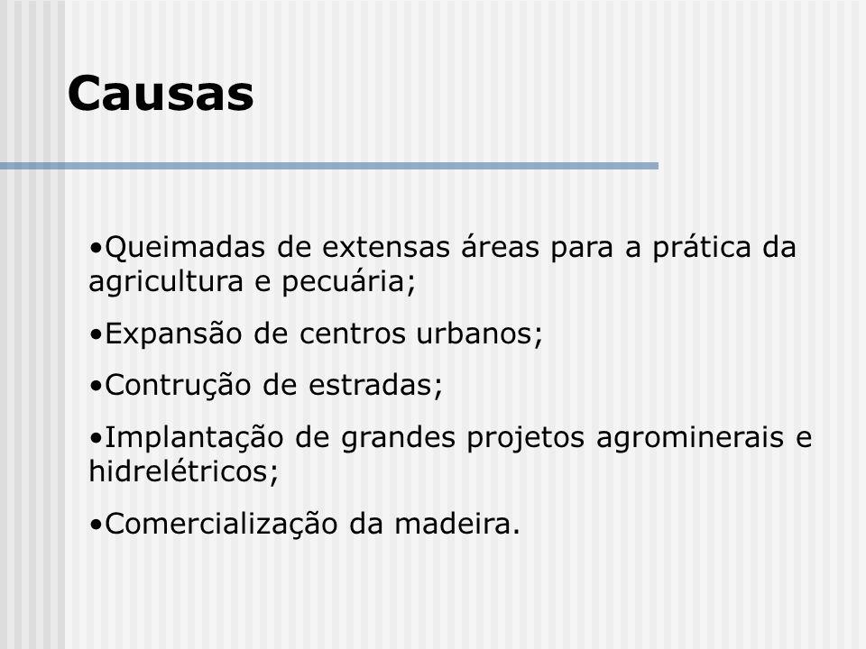 Causas Queimadas de extensas áreas para a prática da agricultura e pecuária; Expansão de centros urbanos; Contrução de estradas; Implantação de grande