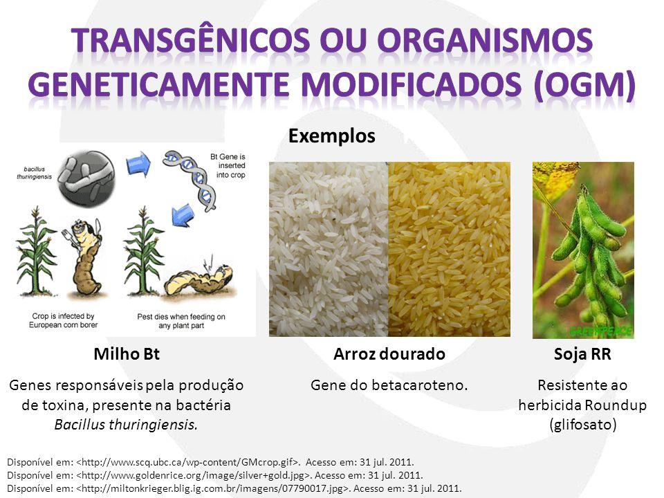 Exemplos Disponível em:. Acesso em: 31 jul. 2011. Milho Bt Genes responsáveis pela produção de toxina, presente na bactéria Bacillus thuringiensis. Ar