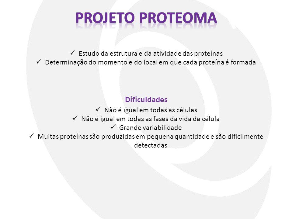 Dificuldades Estudo da estrutura e da atividade das proteínas Determinação do momento e do local em que cada proteína é formada Não é igual em todas a