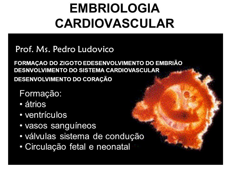 DESENVOLVIMENTO INICIAL DO SISTEMA CARDIOVASCULAR Sistema cardiovascular –1 o grande sistema a funcionar no embrião –Deriva principalmente do mesoderma esplâncnico Desenvolvimento Inicial – 3 a semana –Cordões angioblásticos – mesoderma esplâcnico –Tubos endocárdicos do coração Fusão – coração tubular ( final da 3 a semana ) Camadas: tubo endotelial ( endocárdio ),geléia cardíaca,miocárdio, pericárdio viceral ou epicárdio –21 o dia começa a bater