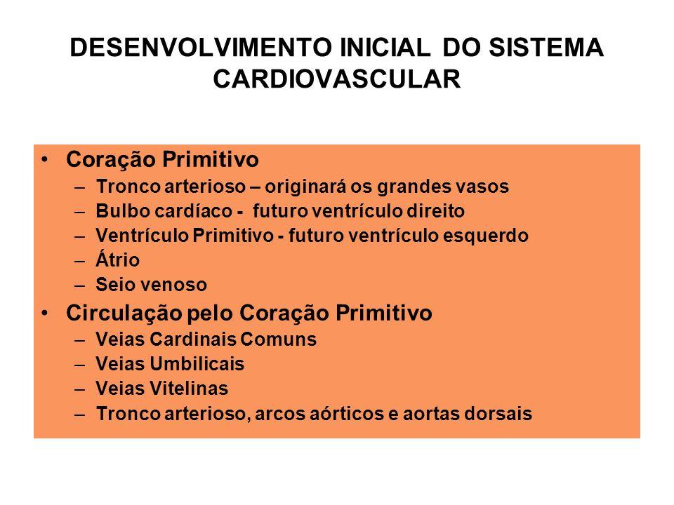 Coração Primitivo –Tronco arterioso – originará os grandes vasos –Bulbo cardíaco - futuro ventrículo direito –Ventrículo Primitivo - futuro ventrículo esquerdo –Átrio –Seio venoso Circulação pelo Coração Primitivo –Veias Cardinais Comuns –Veias Umbilicais –Veias Vitelinas –Tronco arterioso, arcos aórticos e aortas dorsais DESENVOLVIMENTO INICIAL DO SISTEMA CARDIOVASCULAR