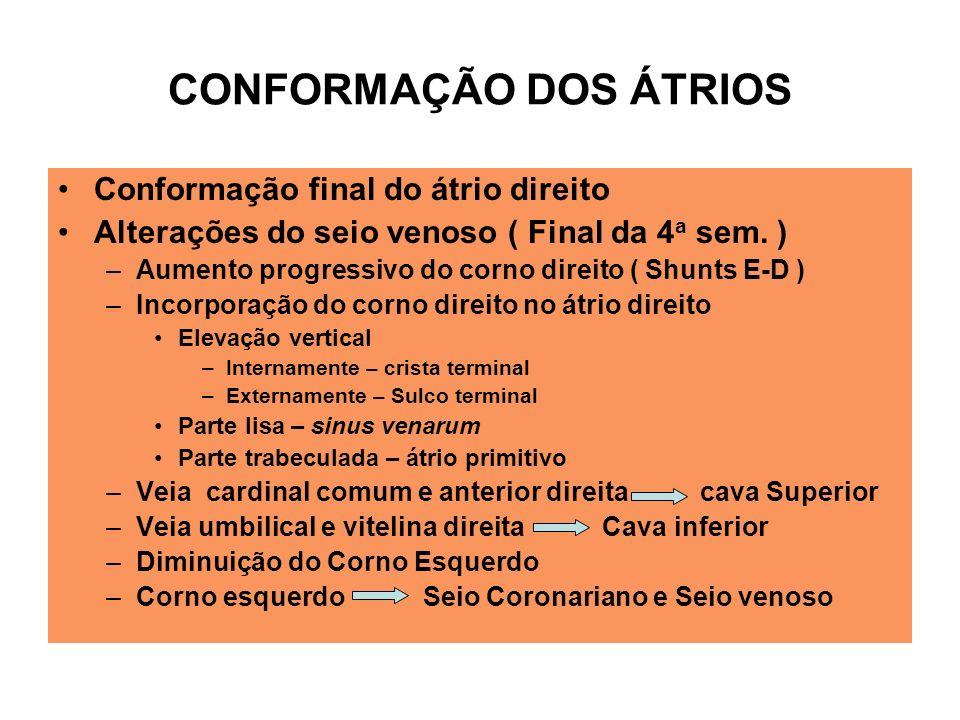 CONFORMAÇÃO DOS ÁTRIOS Conformação final do átrio direito Alterações do seio venoso ( Final da 4 a sem.