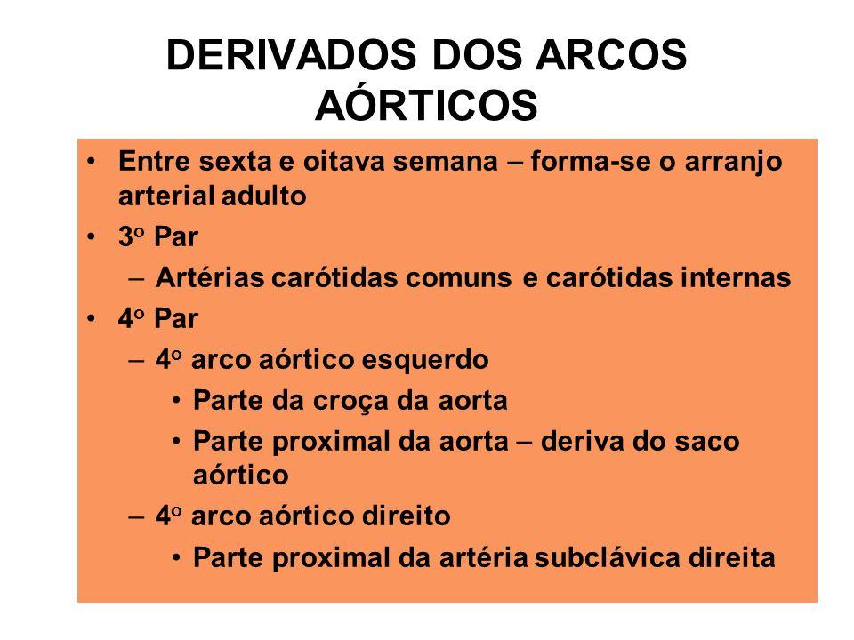 DERIVADOS DOS ARCOS AÓRTICOS Entre sexta e oitava semana – forma-se o arranjo arterial adulto 3 o Par –Artérias carótidas comuns e carótidas internas 4 o Par –4 o arco aórtico esquerdo Parte da croça da aorta Parte proximal da aorta – deriva do saco aórtico –4 o arco aórtico direito Parte proximal da artéria subclávica direita