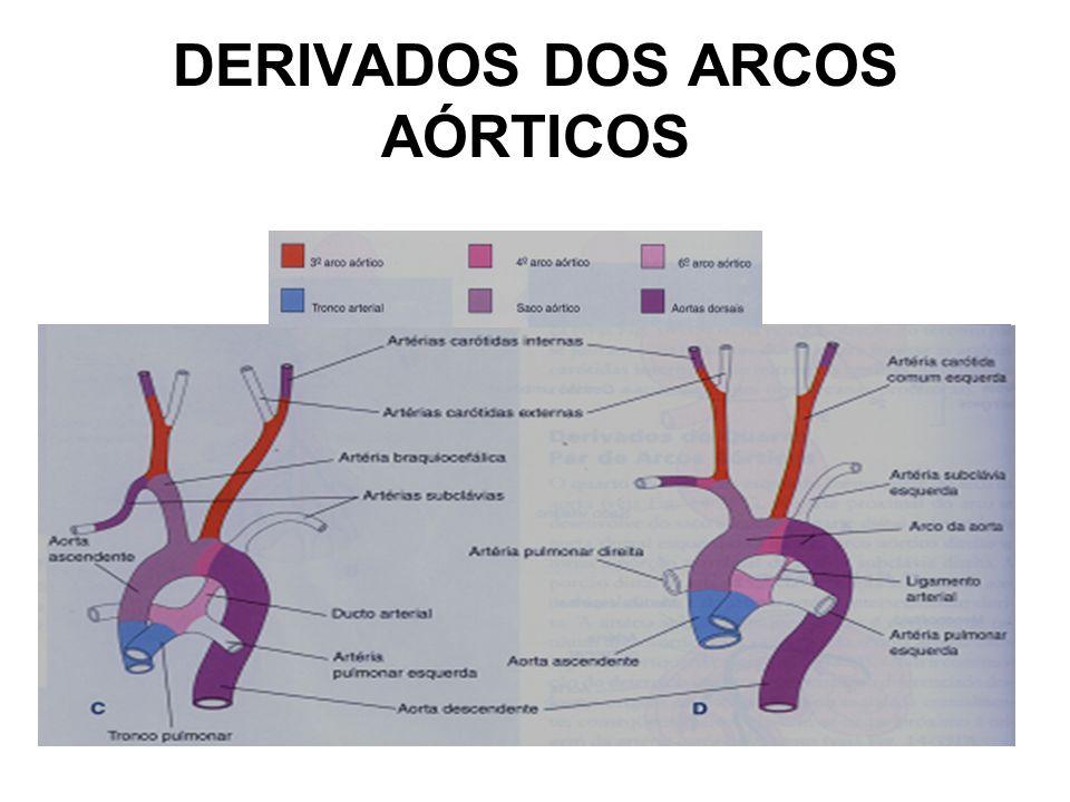 DERIVADOS DOS ARCOS AÓRTICOS