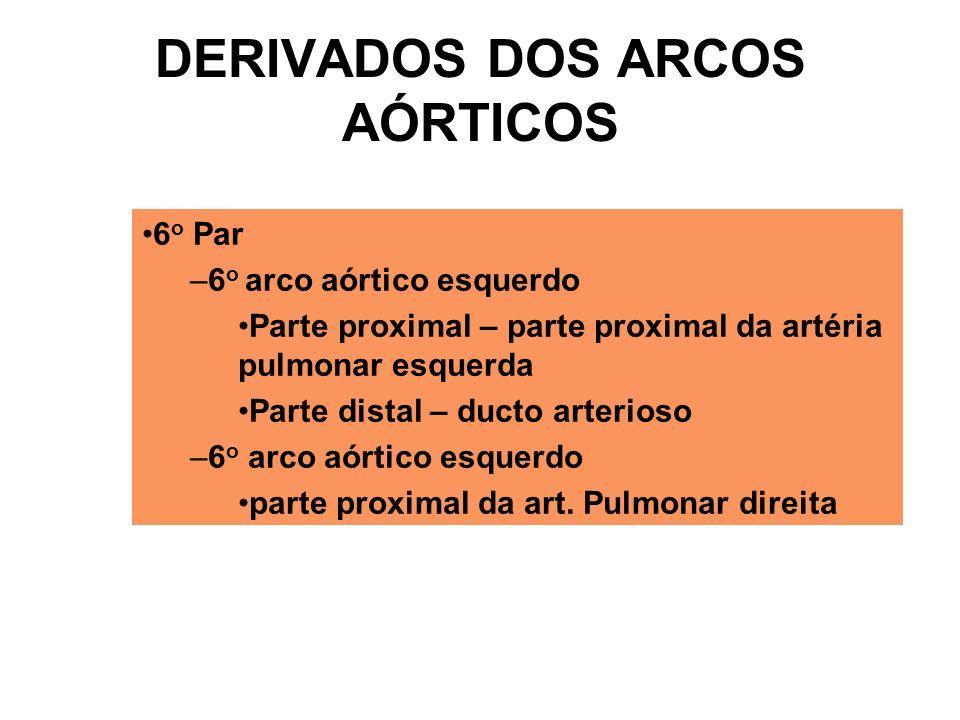 6 o Par –6 o arco aórtico esquerdo Parte proximal – parte proximal da artéria pulmonar esquerda Parte distal – ducto arterioso –6 o arco aórtico esquerdo parte proximal da art.