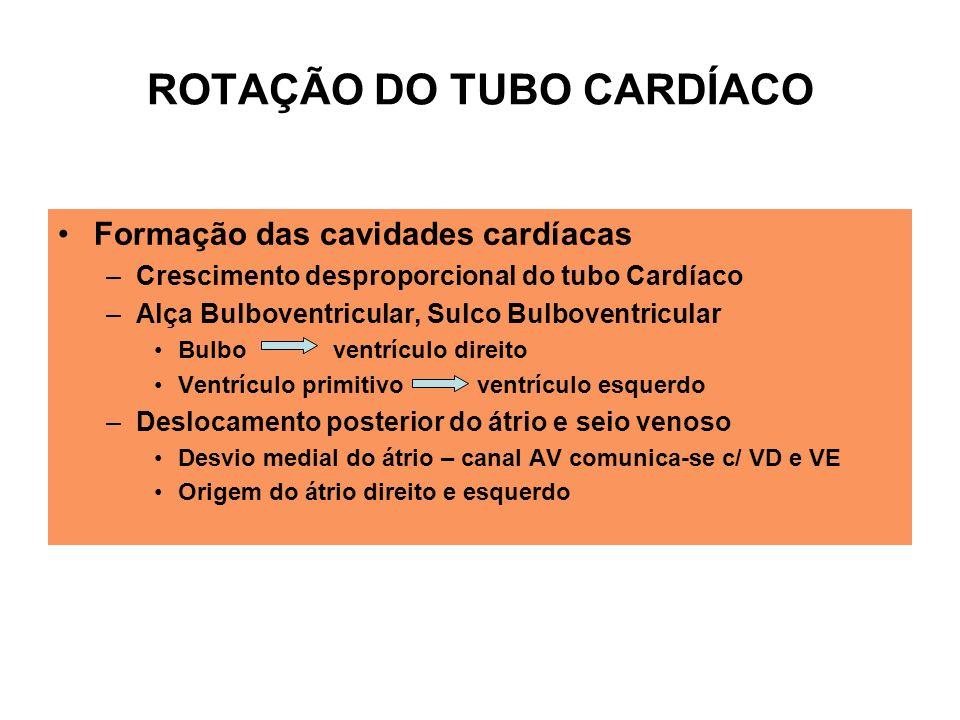 ROTAÇÃO DO TUBO CARDÍACO Formação das cavidades cardíacas –Crescimento desproporcional do tubo Cardíaco –Alça Bulboventricular, Sulco Bulboventricular Bulbo ventrículo direito Ventrículo primitivo ventrículo esquerdo –Deslocamento posterior do átrio e seio venoso Desvio medial do átrio – canal AV comunica-se c/ VD e VE Origem do átrio direito e esquerdo