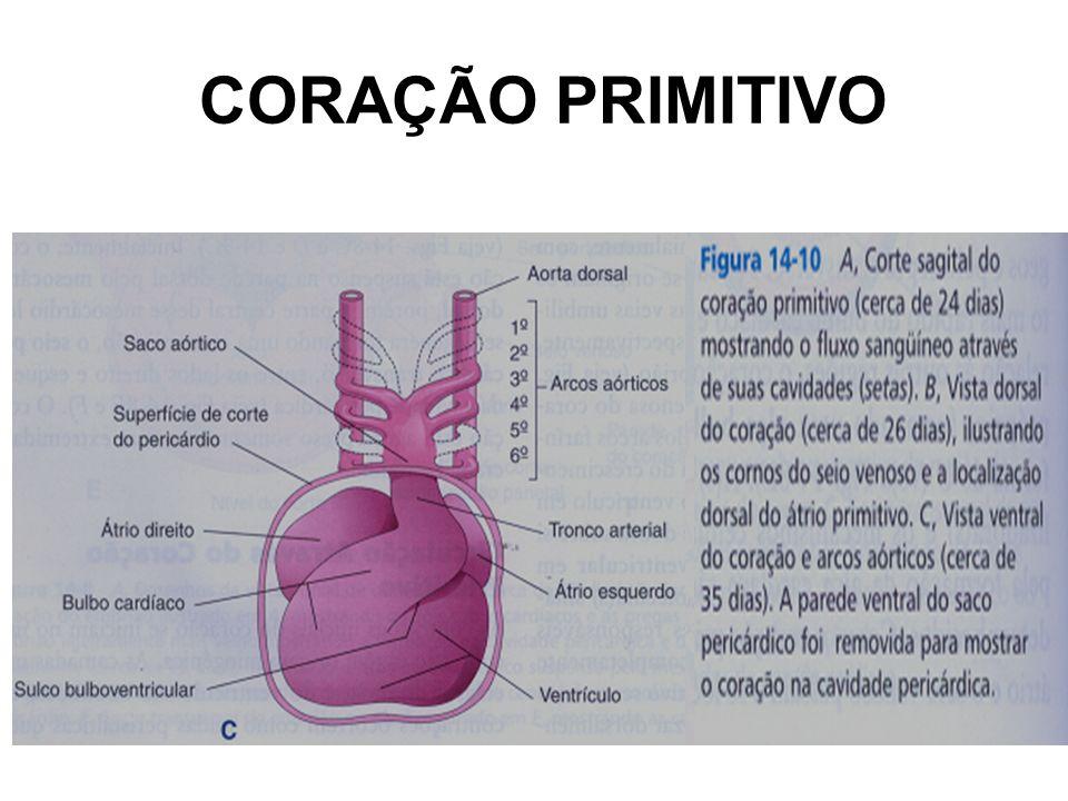 CORAÇÃO PRIMITIVO