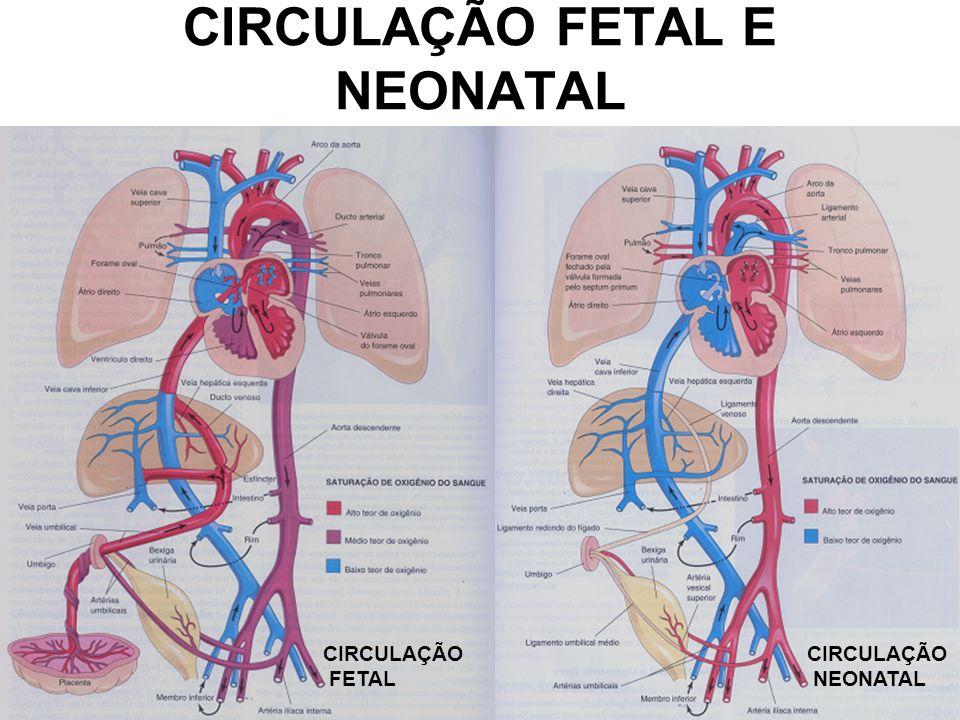 CIRCULAÇÃO FETAL E NEONATAL CIRCULAÇÃO FETAL CIRCULAÇÃO NEONATAL
