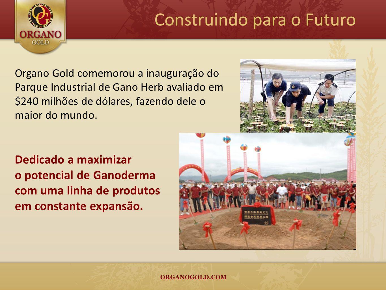 Organo Gold comemorou a inauguração do Parque Industrial de Gano Herb avaliado em $240 milhões de dólares, fazendo dele o maior do mundo. Construindo