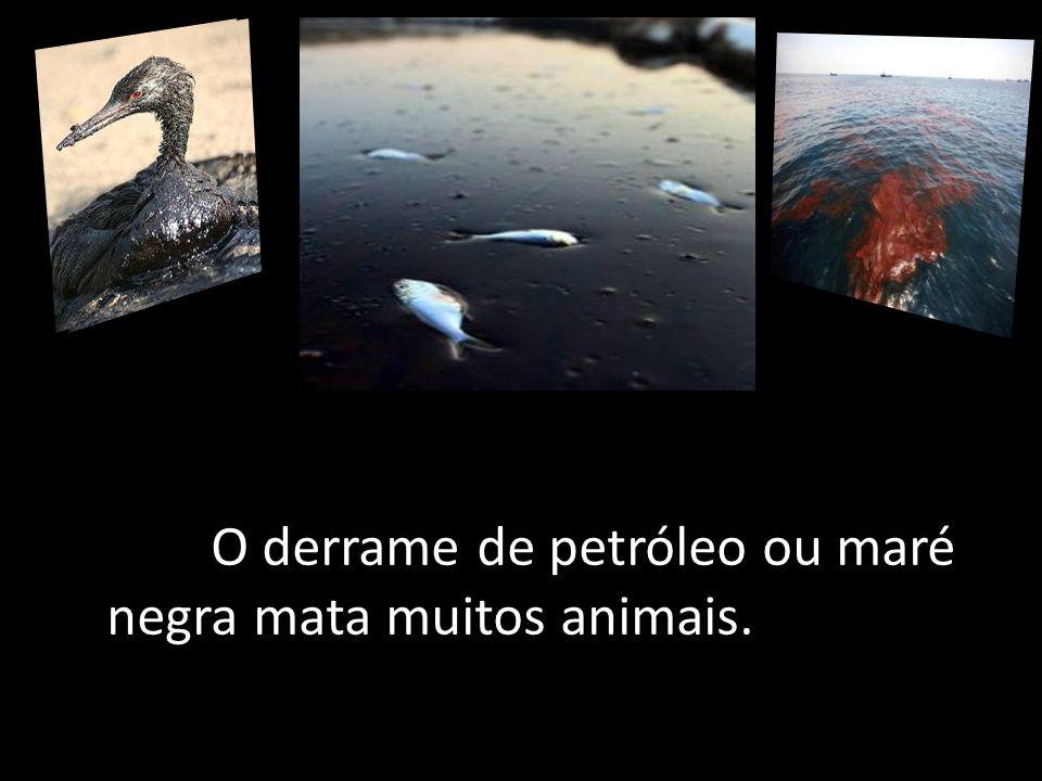 O derrame de petróleo ou maré negra mata muitos animais.