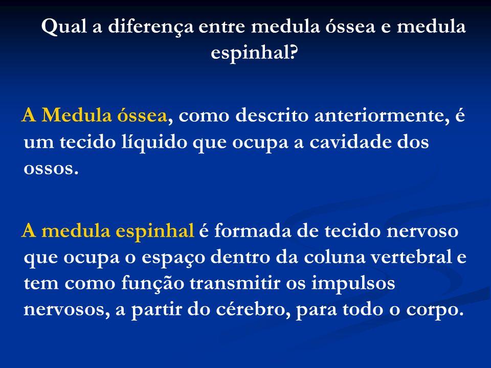 Qual a diferença entre medula óssea e medula espinhal? A Medula óssea, como descrito anteriormente, é um tecido líquido que ocupa a cavidade dos ossos