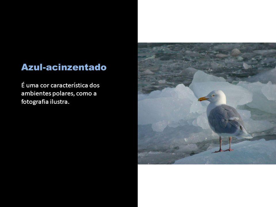c Azul-acinzentado É uma cor característica dos ambientes polares, como a fotografia ilustra.