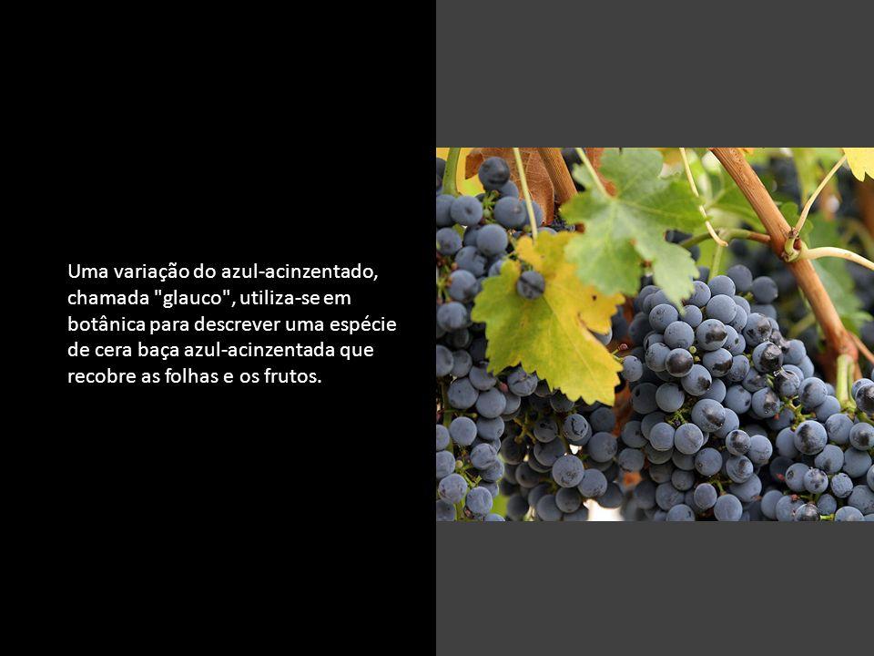 c Uma variação do azul-acinzentado, chamada glauco , utiliza-se em botânica para descrever uma espécie de cera baça azul-acinzentada que recobre as folhas e os frutos.