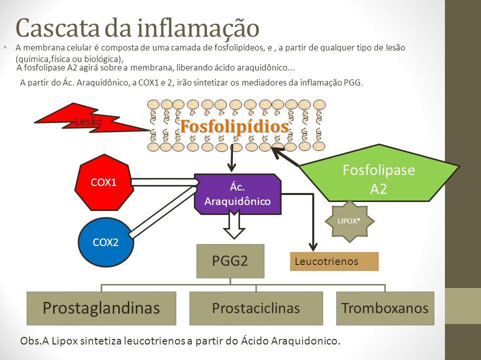 Cascata da inflamação A membrana celular é composta de uma camada de fosfolipídeos, e, a partir de qualquer tipo de lesão (química,física ou biológica), Fosfolipídios Lesão Fosfolipase A2 Ác.
