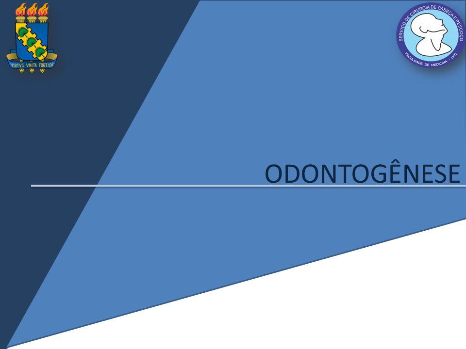 Odontogênese Início na 6ª semana Origem embriológica: ectoderma oral (esmalte), mesoderma e células da crista neural (demais tecidos) Espessamento do epitélio oral forma as lâminas dentárias