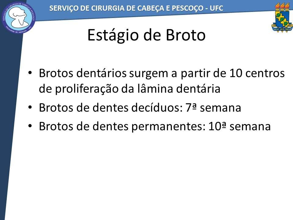 Estágio de Broto Brotos dentários surgem a partir de 10 centros de proliferação da lâmina dentária Brotos de dentes decíduos: 7ª semana Brotos de dent