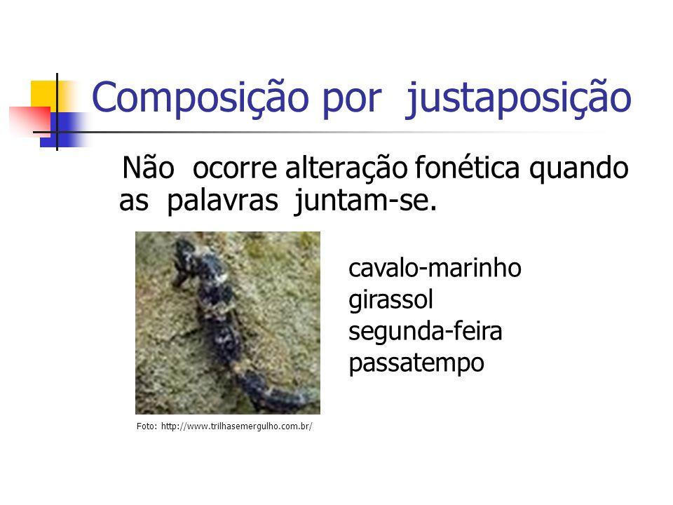 Composição por justaposição Não ocorre alteração fonética quando as palavras juntam-se. cavalo-marinho girassol segunda-feira passatempo Foto: http://