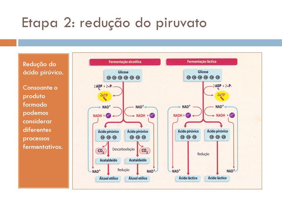 Etapa 2: redução do piruvato Redução do ácido pirúvico. Consoante o produto formado podemos considerar diferentes processos fermentativos.