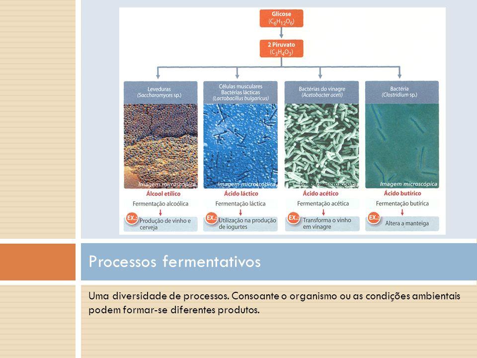 Uma diversidade de processos. Consoante o organismo ou as condições ambientais podem formar-se diferentes produtos. Processos fermentativos