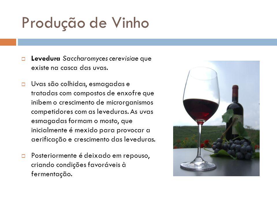 Produção de Vinho Levedura Saccharomyces cerevisiae que existe na casca das uvas. Uvas são colhidas, esmagadas e tratadas com compostos de enxofre que