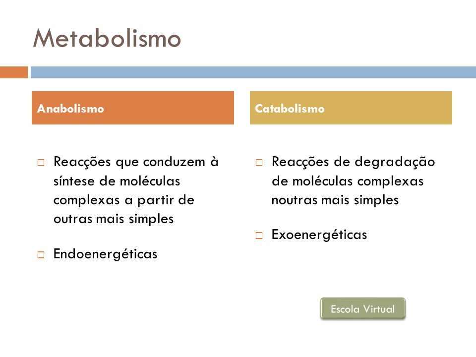 Metabolismo Reacções que conduzem à síntese de moléculas complexas a partir de outras mais simples Endoenergéticas Reacções de degradação de moléculas