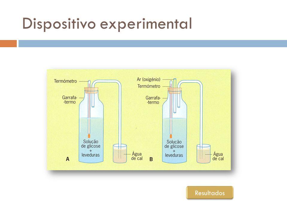 Resultados… DispositivoTemperatura Nº de indivíduos observados OdorTurvação da cal A (sem oxigénio) Aumento ligeiro Aumento Cheiro a álcool Água turva B (com oxigénio) Aumento acentuado Aumento muito acentuado Sem cheiro Água muito turva
