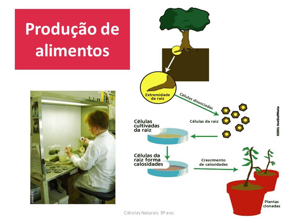 Produção de alimentos Ciências Naturais 9º ano